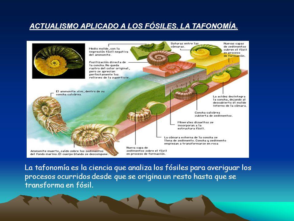 ACTUALISMO APLICADO A LOS FÓSILES. LA TAFONOMÍA. La tafonomía es la ciencia que analiza los fósiles para averiguar los procesos ocurridos desde que se
