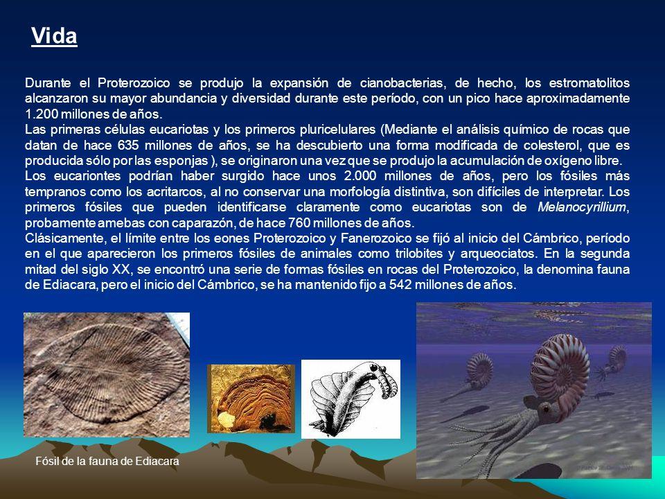 Vida Durante el Proterozoico se produjo la expansión de cianobacterias, de hecho, los estromatolitos alcanzaron su mayor abundancia y diversidad duran