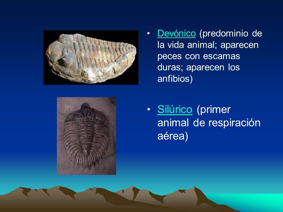 Devónico (predominio de la vida animal; aparecen peces con escamas duras; aparecen los anfibios) Silúrico (primer animal de respiración aérea)
