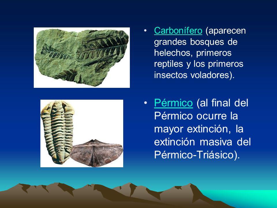 Carbonífero (aparecen grandes bosques de helechos, primeros reptiles y los primeros insectos voladores). Pérmico (al final del Pérmico ocurre la mayor