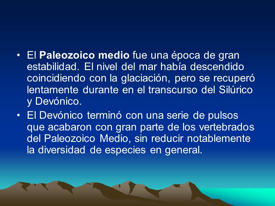 El Paleozoico medio fue una época de gran estabilidad. El nivel del mar había descendido coincidiendo con la glaciación, pero se recuperó lentamente d