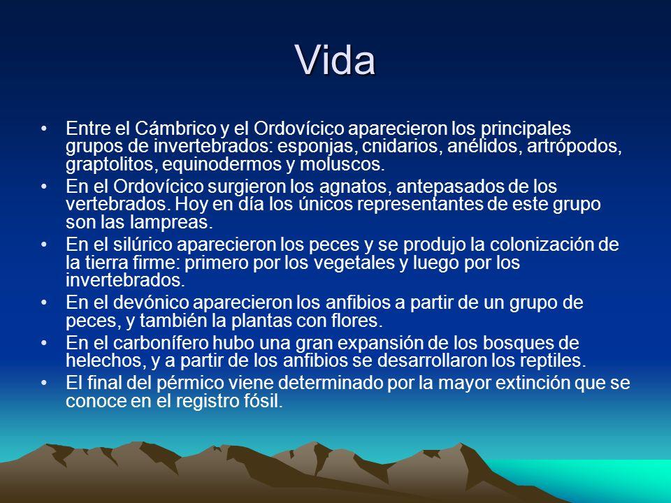 Vida Entre el Cámbrico y el Ordovícico aparecieron los principales grupos de invertebrados: esponjas, cnidarios, anélidos, artrópodos, graptolitos, eq