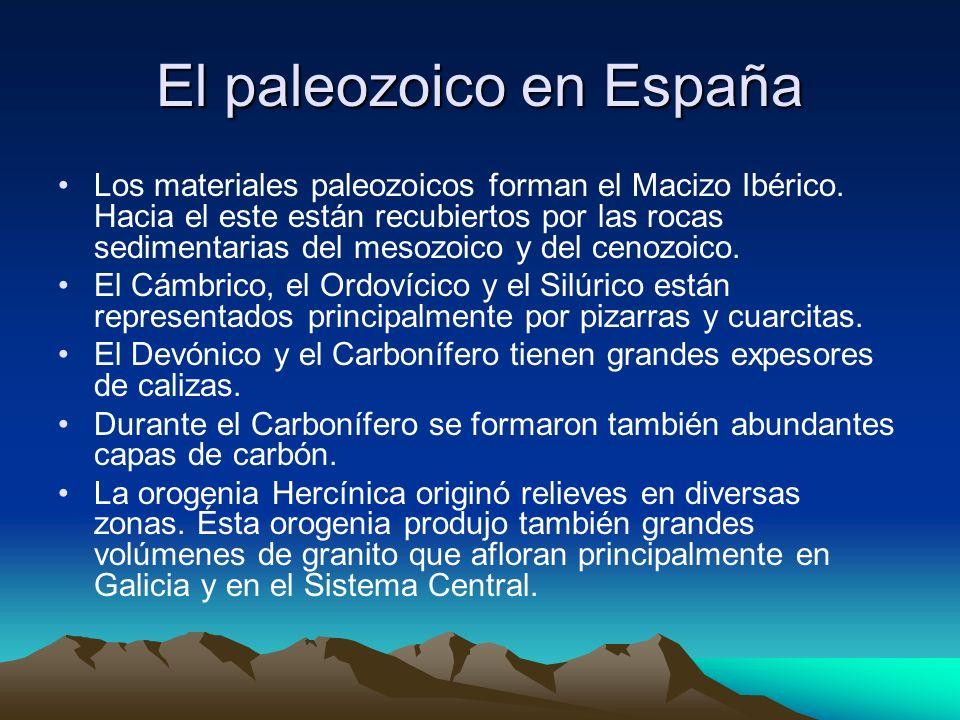 El paleozoico en España Los materiales paleozoicos forman el Macizo Ibérico. Hacia el este están recubiertos por las rocas sedimentarias del mesozoico