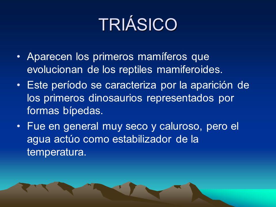 TRIÁSICO Aparecen los primeros mamíferos que evolucionan de los reptiles mamiferoides. Este período se caracteriza por la aparición de los primeros di