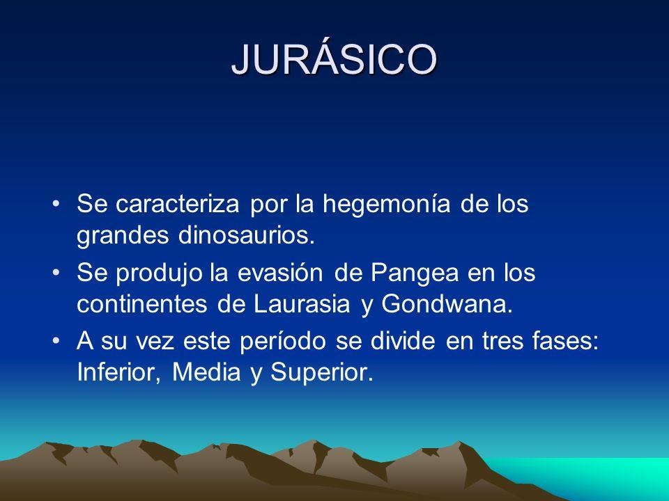 JURÁSICO Se caracteriza por la hegemonía de los grandes dinosaurios. Se produjo la evasión de Pangea en los continentes de Laurasia y Gondwana. A su v