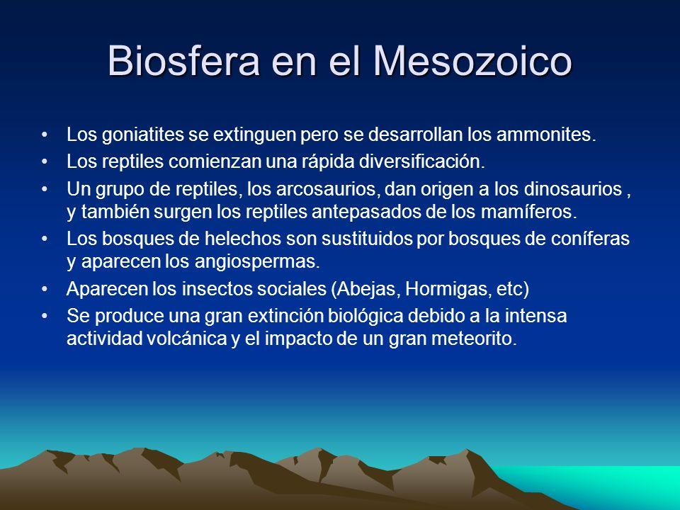 Biosfera en el Mesozoico Los goniatites se extinguen pero se desarrollan los ammonites. Los reptiles comienzan una rápida diversificación. Un grupo de
