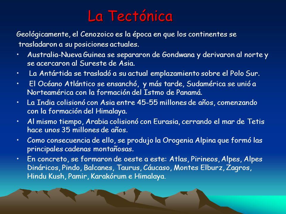 La Tectónica Geológicamente, el Cenozoico es la época en que los continentes se trasladaron a su posiciones actuales. Australia-Nueva Guinea se separa