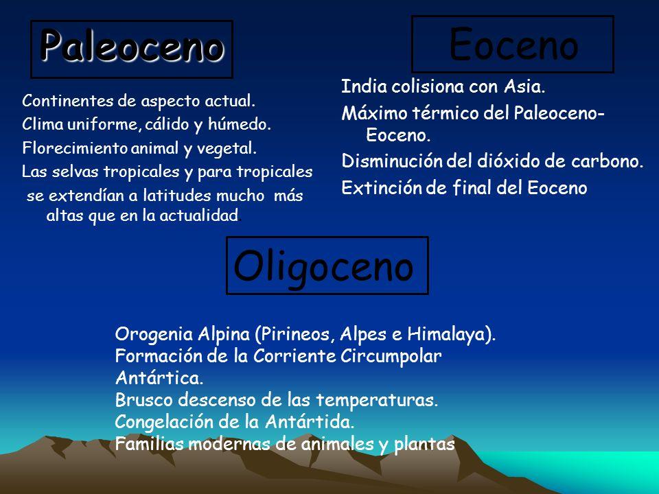 Continentes de aspecto actual. Clima uniforme, cálido y húmedo. Florecimiento animal y vegetal. Las selvas tropicales y para tropicales se extendían a