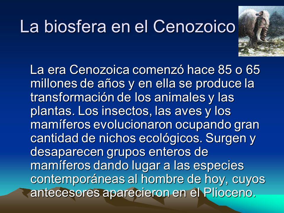 La biosfera en el Cenozoico La era Cenozoica comenzó hace 85 o 65 millones de años y en ella se produce la transformación de los animales y las planta