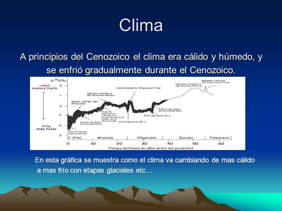 Clima A principios del Cenozoico el clima era cálido y húmedo, y se enfrió gradualmente durante el Cenozoico. En esta gráfica se muestra como el clima