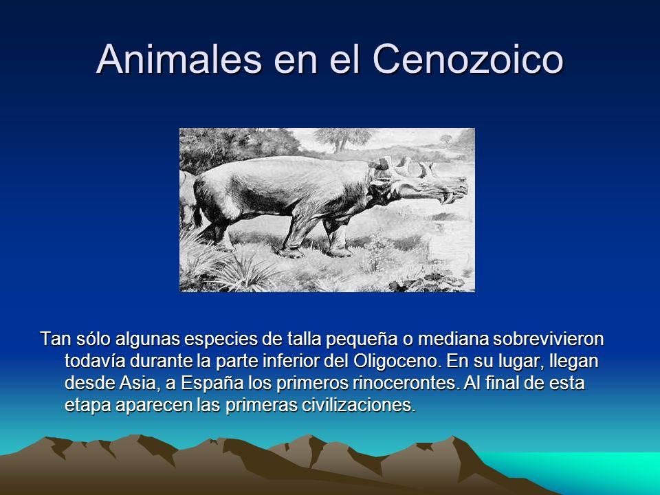 Animales en el Cenozoico Tan sólo algunas especies de talla pequeña o mediana sobrevivieron todavía durante la parte inferior del Oligoceno. En su lug
