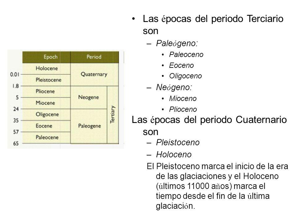 Las é pocas del periodo Terciario son –Pale ó geno: Paleoceno Eoceno Oligoceno –Ne ó geno: Mioceno Plioceno Las é pocas del periodo Cuaternario son –P