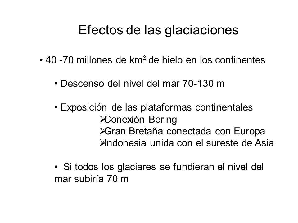 Efectos de las glaciaciones 40 -70 millones de km 3 de hielo en los continentes Descenso del nivel del mar 70-130 m Exposición de las plataformas cont