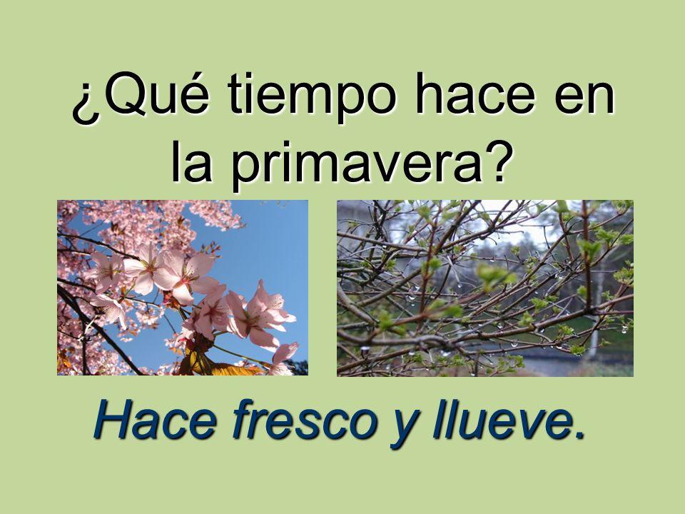 ¿Qué tiempo hace en la primavera? Hace fresco y llueve.