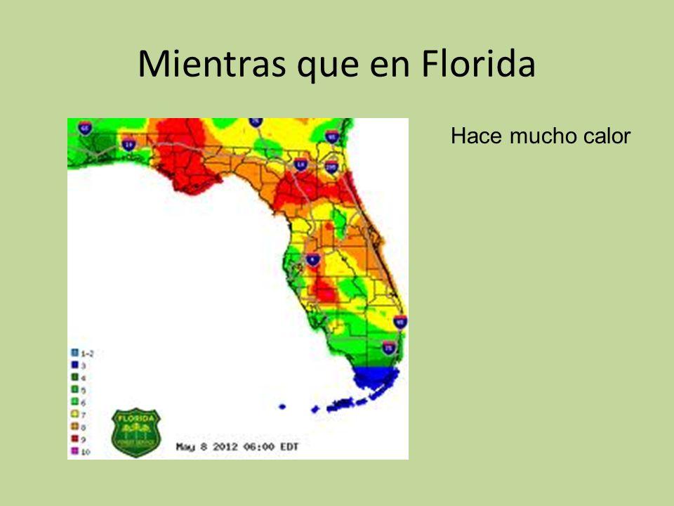 Mientras que en Florida Hace mucho calor