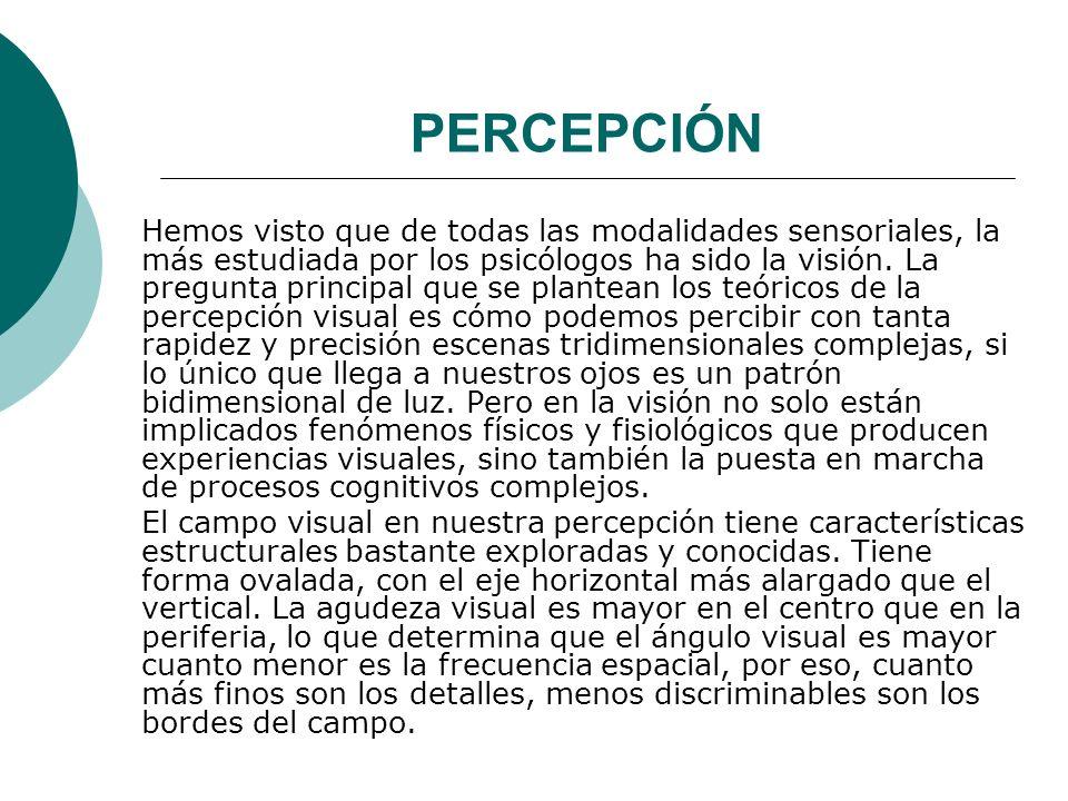 PERCEPCIÓN Hemos visto que de todas las modalidades sensoriales, la más estudiada por los psicólogos ha sido la visión.