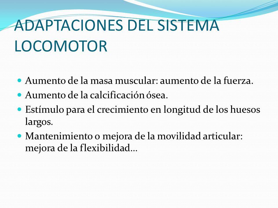 ADAPTACIONES DEL SISTEMA LOCOMOTOR Aumento de la masa muscular: aumento de la fuerza. Aumento de la calcificación ósea. Estímulo para el crecimiento e