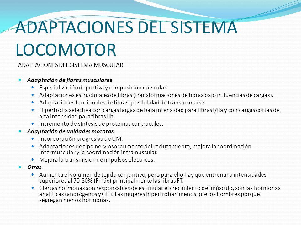 ADAPTACIONES DEL SISTEMA LOCOMOTOR ADAPTACIONES DEL SISTEMA MUSCULAR Adaptación de fibras musculares Especialización deportiva y composición muscular.