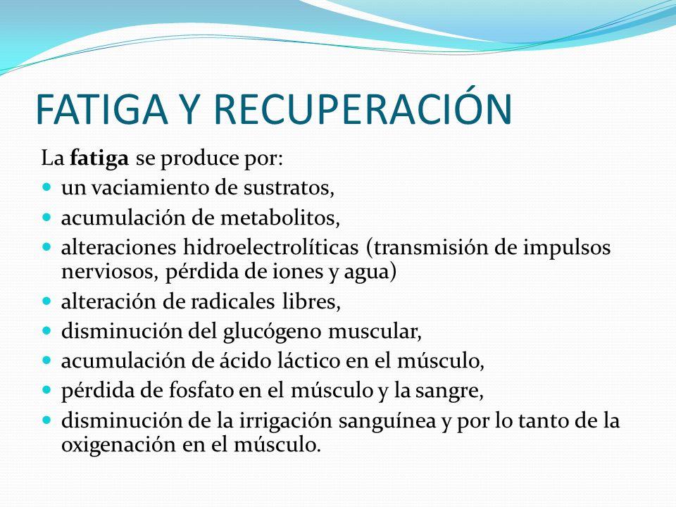 FATIGA Y RECUPERACIÓN La fatiga se produce por: un vaciamiento de sustratos, acumulación de metabolitos, alteraciones hidroelectrolíticas (transmisión
