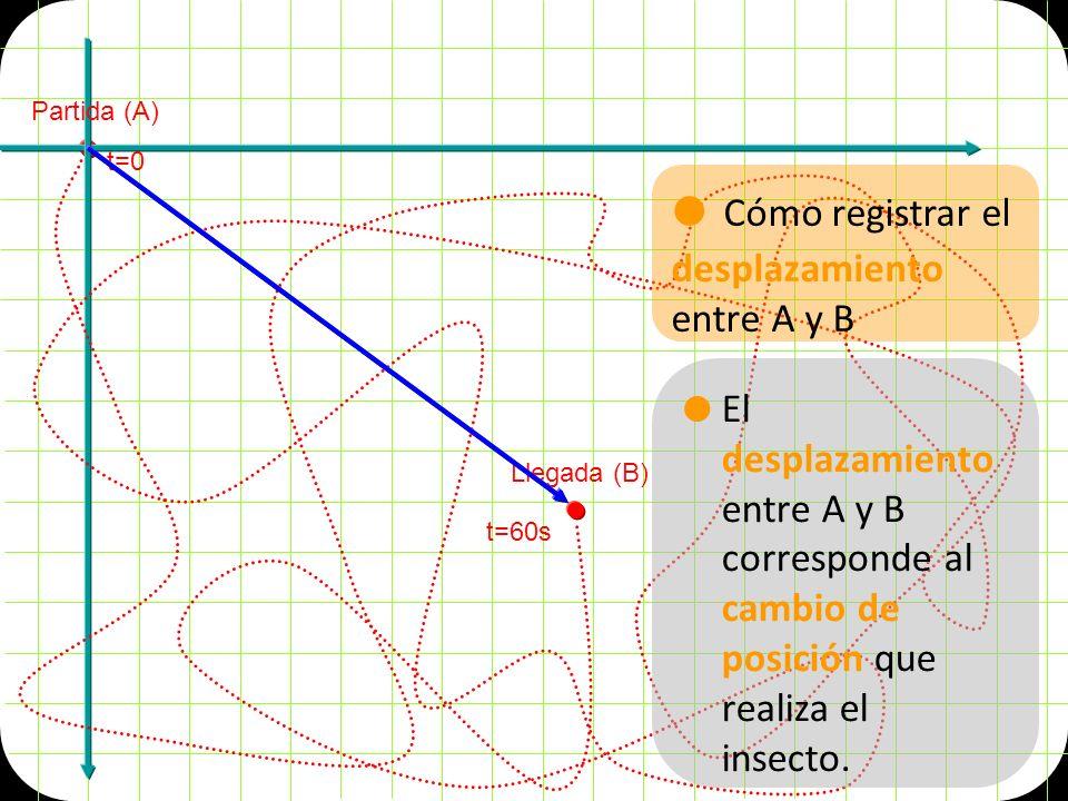Partida (A) Llegada (B) t=0 t=60s Cómo registrar el desplazamiento entre A y B El desplazamiento entre A y B corresponde al cambio de posición que realiza el insecto.