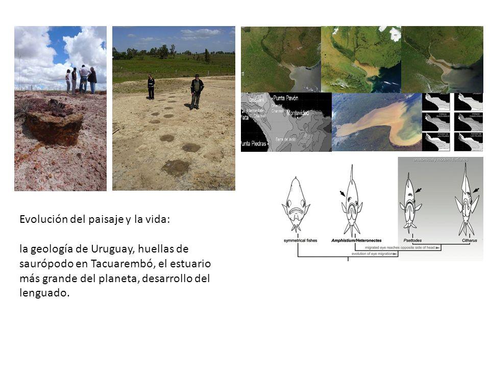 Evolución del paisaje y la vida: la geología de Uruguay, huellas de saurópodo en Tacuarembó, el estuario más grande del planeta, desarrollo del lenguado.