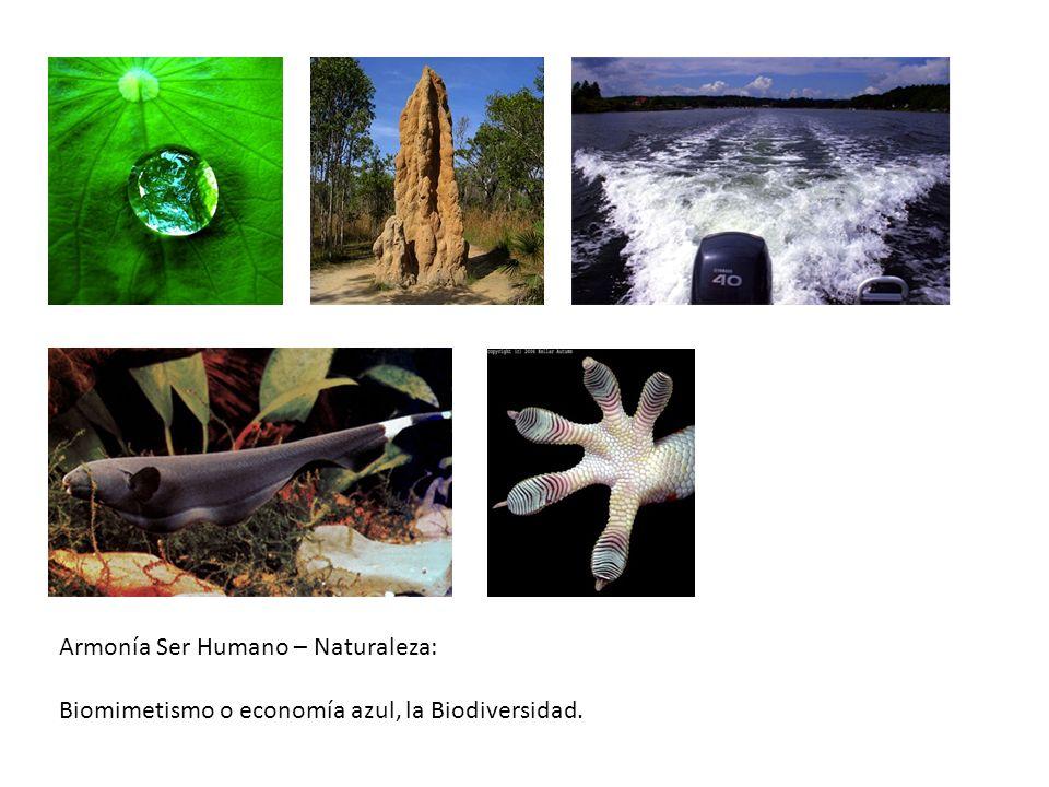 Armonía Ser Humano – Naturaleza: Biomimetismo o economía azul, la Biodiversidad.