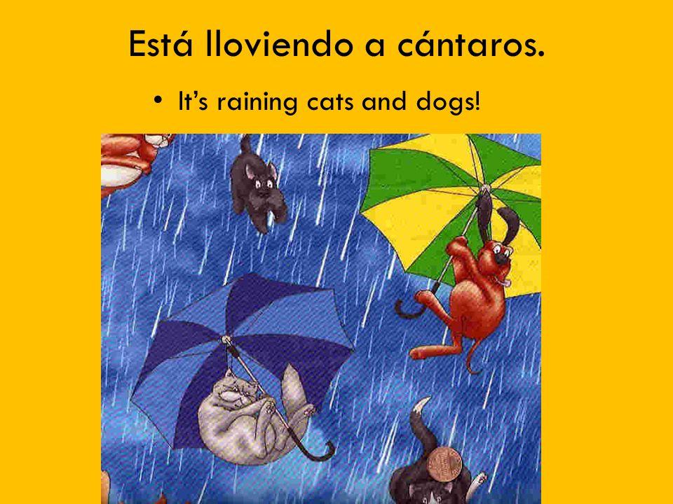 Está lloviendo a cántaros. Its raining cats and dogs!