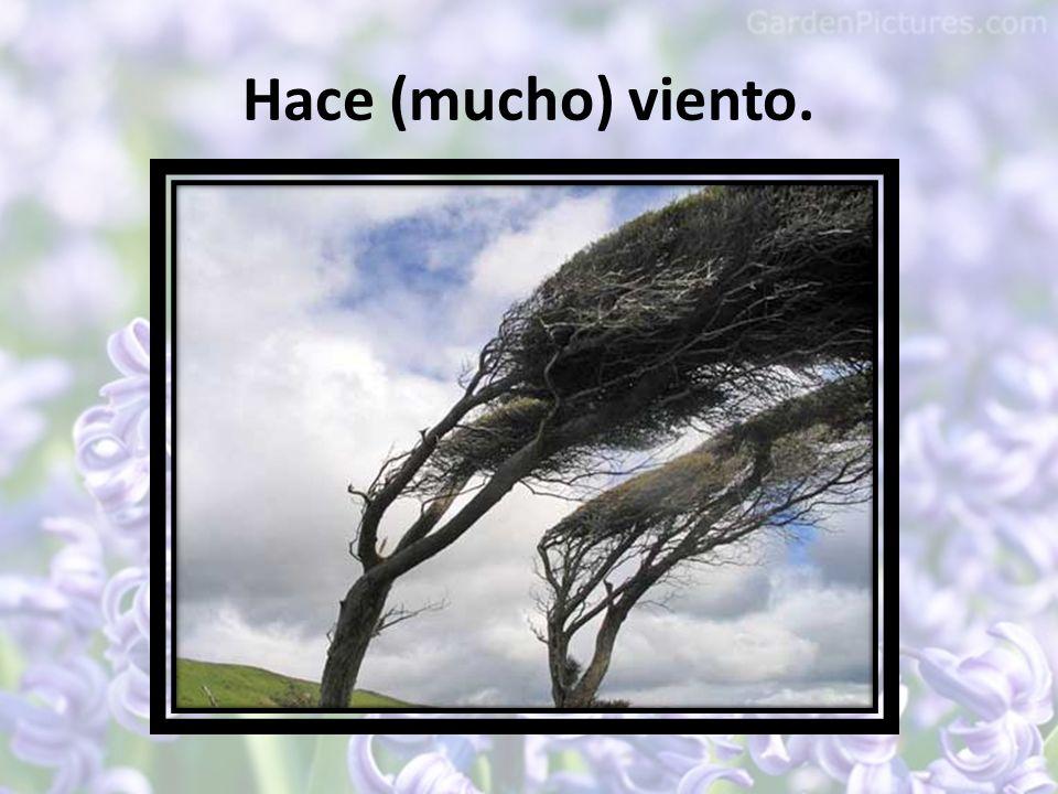 Hace (mucho) viento.