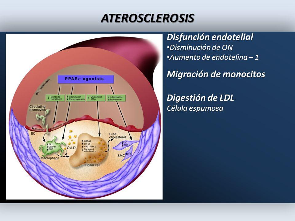 ATEROSCLEROSIS Disfunción endotelial Disminución de ON Disminución de ON Aumento de endotelina – 1 Aumento de endotelina – 1 Migración de monocitos Di