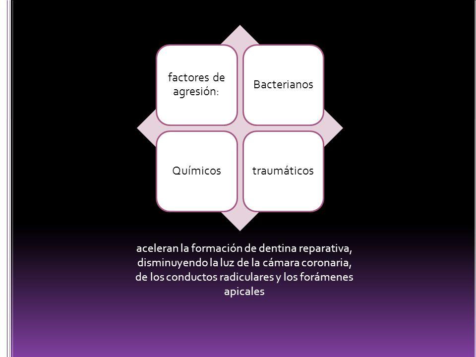 factores de agresión: BacterianosQuímicostraumáticos aceleran la formación de dentina reparativa, disminuyendo la luz de la cámara coronaria, de los c