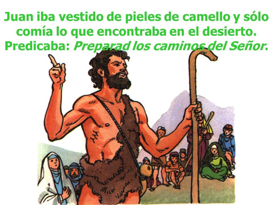 Juan iba vestido de pieles de camello y sólo comía lo que encontraba en el desierto. Predicaba: Preparad los caminos del Señor.
