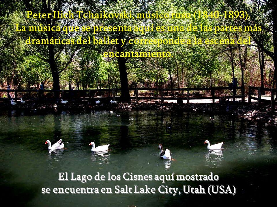 El Lago de los Cisnes aquí mostrado se encuentra en Salt Lake City, Utah (USA) El Lago de los Cisnes aquí mostrado se encuentra en Salt Lake City, Utah (USA) Peter Ilich Tchaikovski, músico ruso (1840-1893).