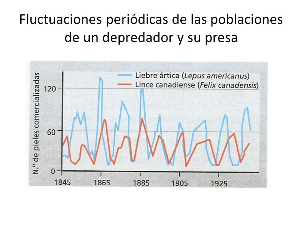 Fluctuaciones periódicas de las poblaciones de un depredador y su presa