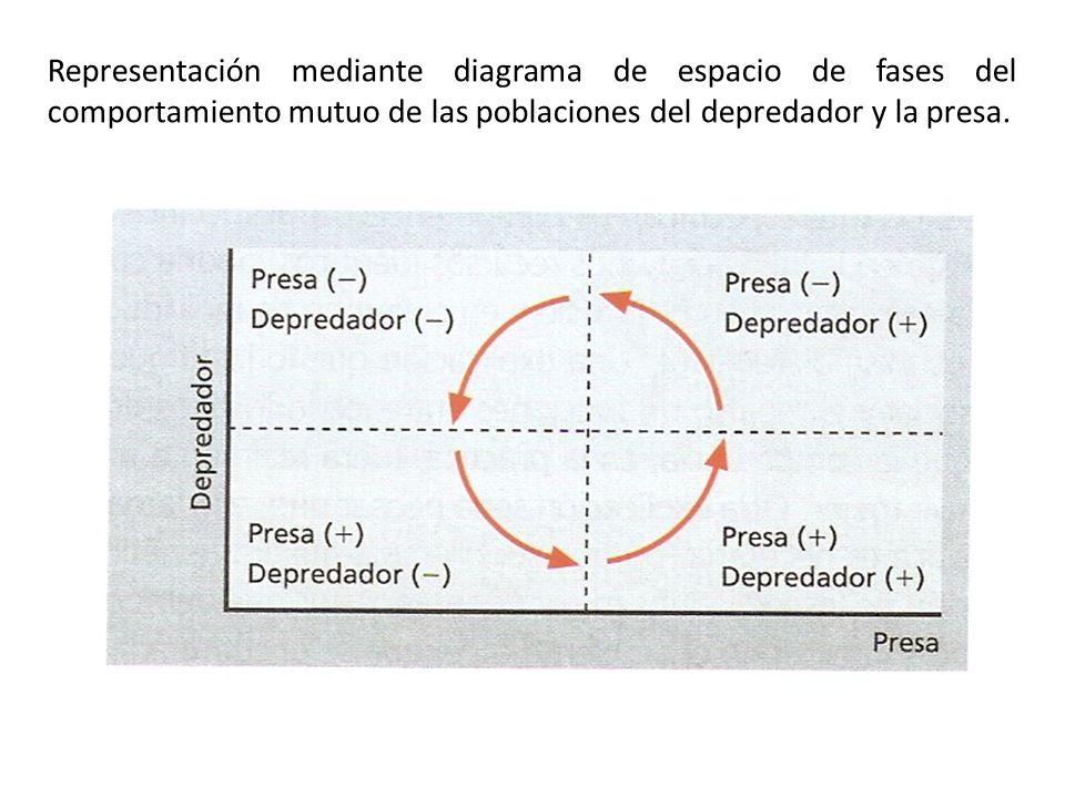 Representación mediante diagrama de espacio de fases del comportamiento mutuo de las poblaciones del depredador y la presa.