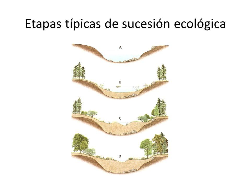 Etapas típicas de sucesión ecológica