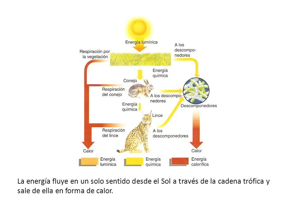 Competencia interespecífica entre dos especies de Paramecium