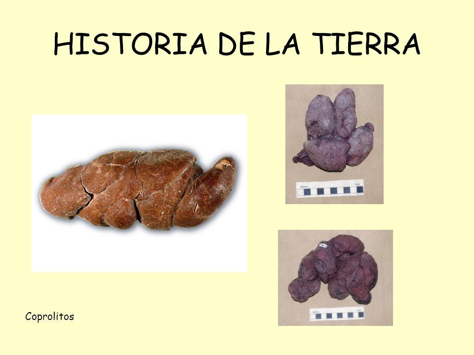 HISTORIA DE LA TIERRA Coprolitos