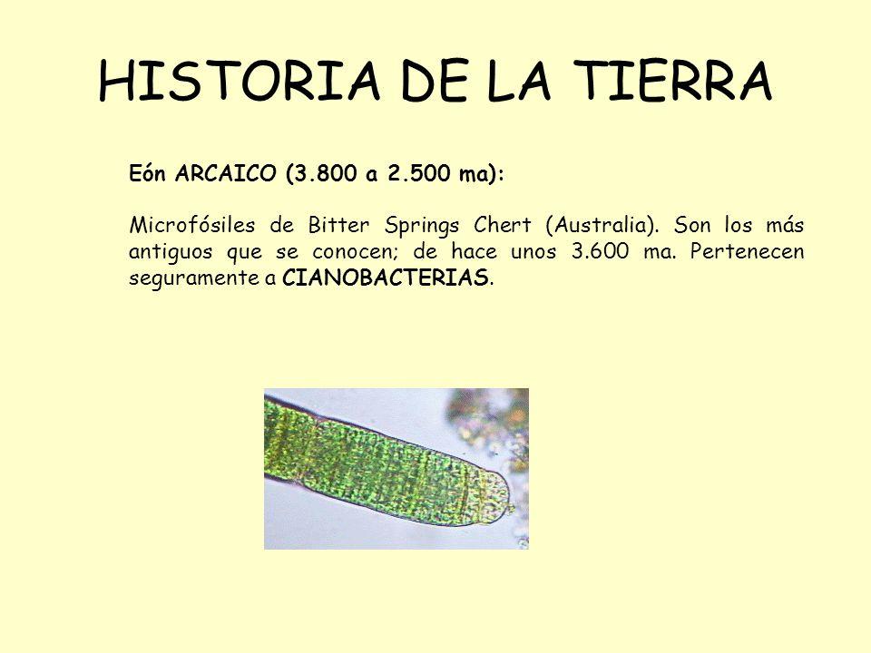 HISTORIA DE LA TIERRA Eón ARCAICO (3.800 a 2.500 ma): Microfósiles de Bitter Springs Chert (Australia). Son los más antiguos que se conocen; de hace u
