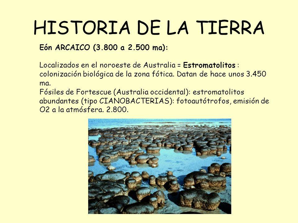 HISTORIA DE LA TIERRA Eón ARCAICO (3.800 a 2.500 ma): Localizados en el noroeste de Australia = Estromatolitos : colonización biológica de la zona fótica.