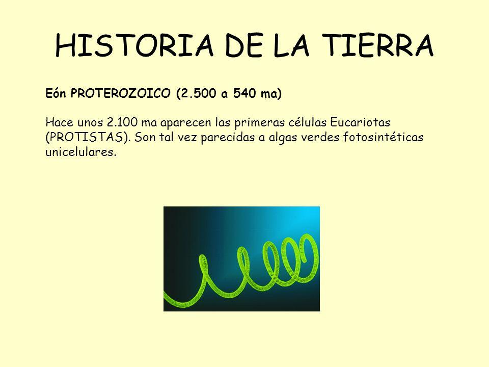 HISTORIA DE LA TIERRA Eón PROTEROZOICO (2.500 a 540 ma) Hace unos 2.100 ma aparecen las primeras células Eucariotas (PROTISTAS). Son tal vez parecidas