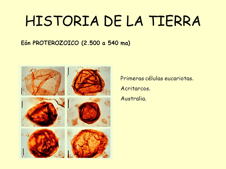 HISTORIA DE LA TIERRA Eón PROTEROZOICO (2.500 a 540 ma) Primeras células eucariotas.