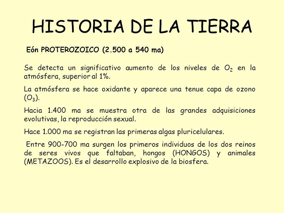 HISTORIA DE LA TIERRA Eón PROTEROZOICO (2.500 a 540 ma) Se detecta un significativo aumento de los niveles de O 2 en la atmósfera, superior al 1%. La