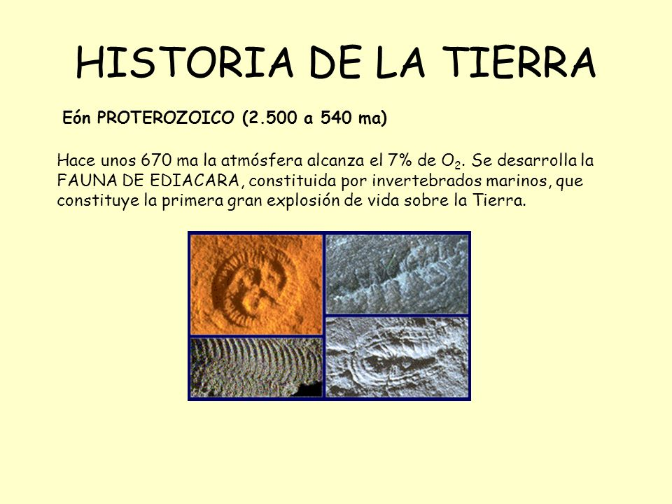 HISTORIA DE LA TIERRA Eón PROTEROZOICO (2.500 a 540 ma) Hace unos 670 ma la atmósfera alcanza el 7% de O 2. Se desarrolla la FAUNA DE EDIACARA, consti