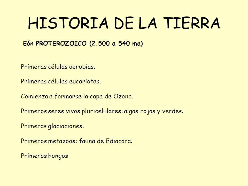 HISTORIA DE LA TIERRA Eón PROTEROZOICO (2.500 a 540 ma) Primeras células aerobias. Primeras células eucariotas. Comienza a formarse la capa de Ozono.