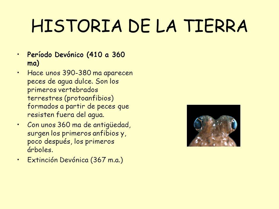 HISTORIA DE LA TIERRA Período Devónico (410 a 360 ma) Hace unos 390-380 ma aparecen peces de agua dulce. Son los primeros vertebrados terrestres (prot
