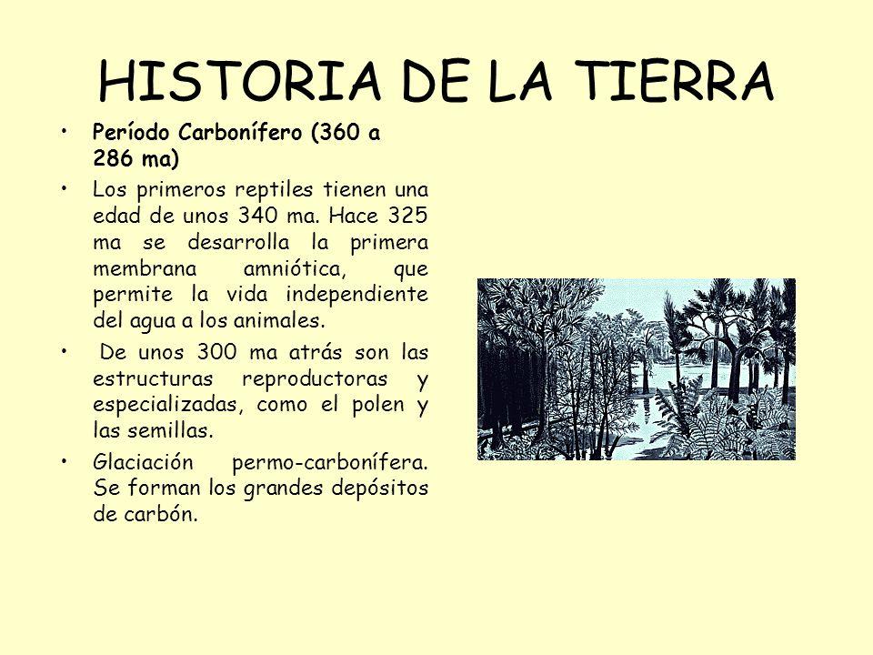 HISTORIA DE LA TIERRA Período Carbonífero (360 a 286 ma) Los primeros reptiles tienen una edad de unos 340 ma. Hace 325 ma se desarrolla la primera me