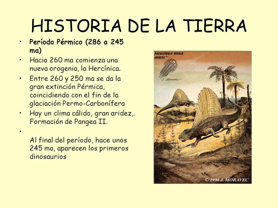 HISTORIA DE LA TIERRA Período Pérmico (286 a 245 ma) Hacia 260 ma comienza una nueva orogenia, la Hercínica. Entre 260 y 250 ma se da la gran extinció