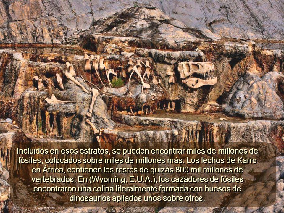 Aproximadamente tres cuartas partes o más (142 millones de Km2), de la superficie terrestre, tiene una capa de varios metros (y hasta 12 Km) de grosor, formada por roca sedimentaria.
