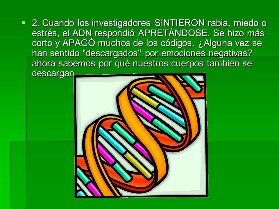 2. Cuando los investigadores SINTIERON rabia, miedo o estrés, el ADN respondió APRETÁNDOSE. Se hizo más corto y APAGÓ muchos de los códigos. ¿Alguna v