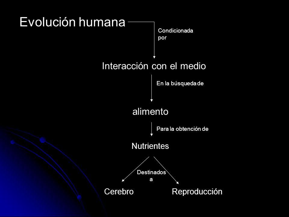 Evolución humana Interacción con el medio Cerebro alimento Nutrientes Reproducción Condicionada por En la búsqueda de Para la obtención de Destinados